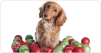 Christmas Holiday Health Hazards for Dogs