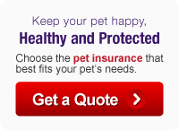 Get a Quote from PetPremium!